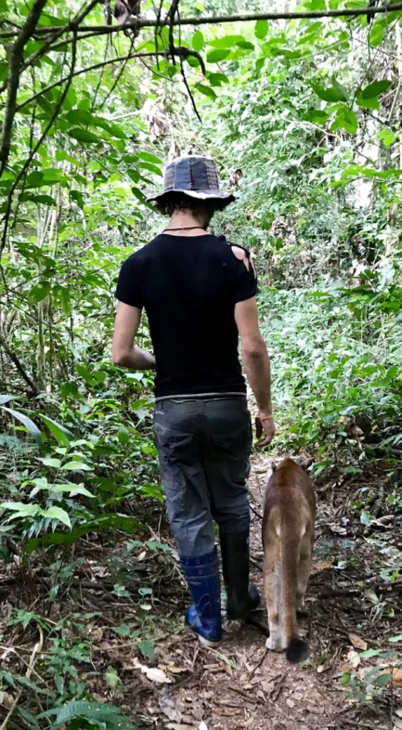 backpacker walking in jungle with a puma